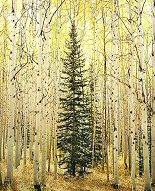 Christopher Burkett, Spruce and Bright Aspen Forest