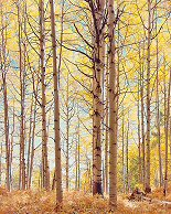 Christopher Burkett, Translucent Forest