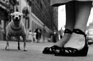 Elliott Erwitt, New York City