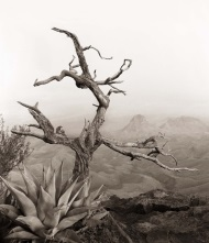 James Evans, South Rim with Agave
