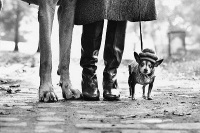 Elliott Erwitt, Dog Legs