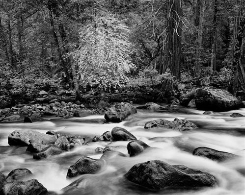 John Sexton, Merced River and Forest