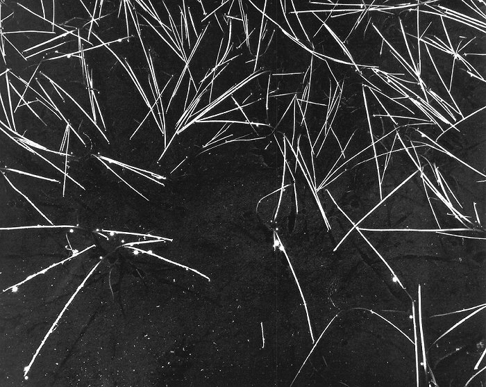 Ansel Adams, Grass and Pool