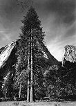 Ansel Adams, Trees and Cliffs