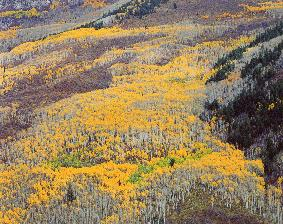 Aspen Mountainside