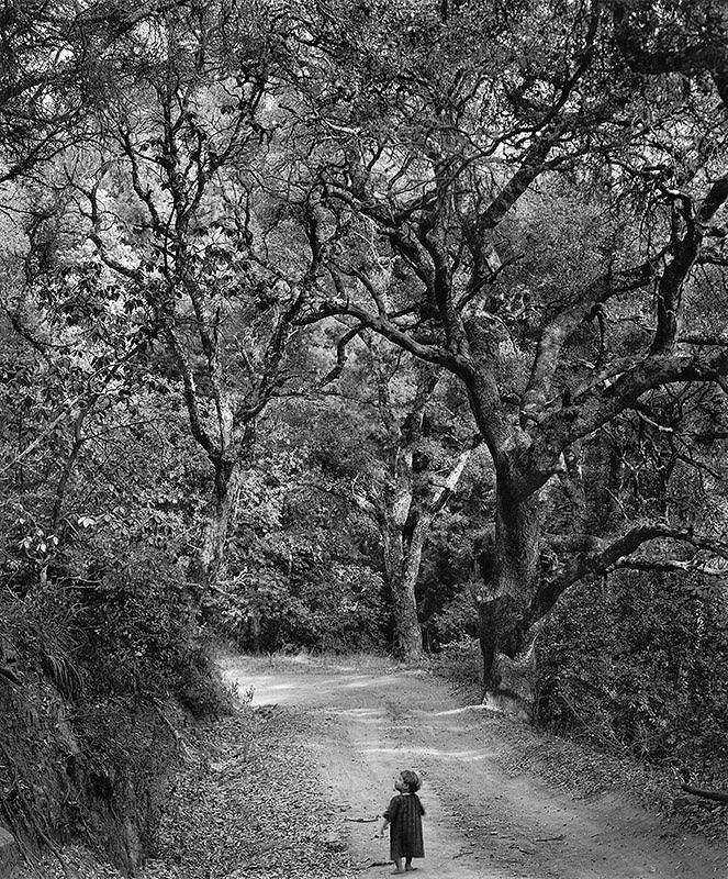 Wynn Bullock, Child on Forest Road