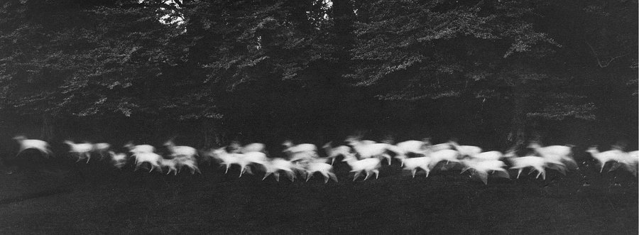 Running White Deer