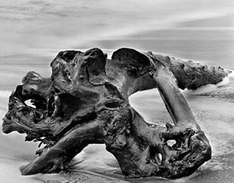 Driftwood Tree Trunk