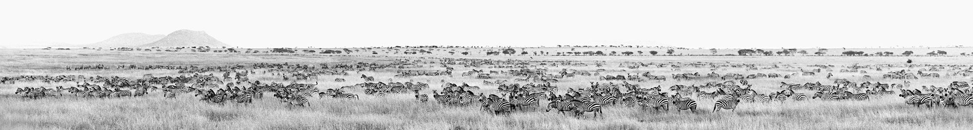 Greg Dimijian, Zera Herd in Serengeti