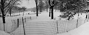 Paul Greenberg, Snow, Central Park, NYC