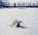 Owen Kanzler, Solitary Oak Tree in Snow
