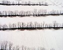 Owen Kanzler, Hedgerows through Light Snow
