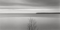 Brian Kosoff, Tree, Lake Superior