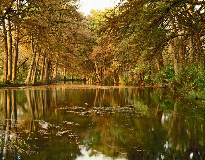 Charles Kruvand, Bald Cypress Trees along Leakey Springs