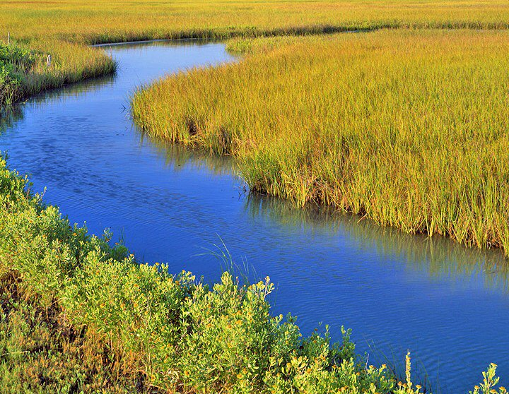 Charles Kruvand, Salt Marsh Flowing into Oyster Lake