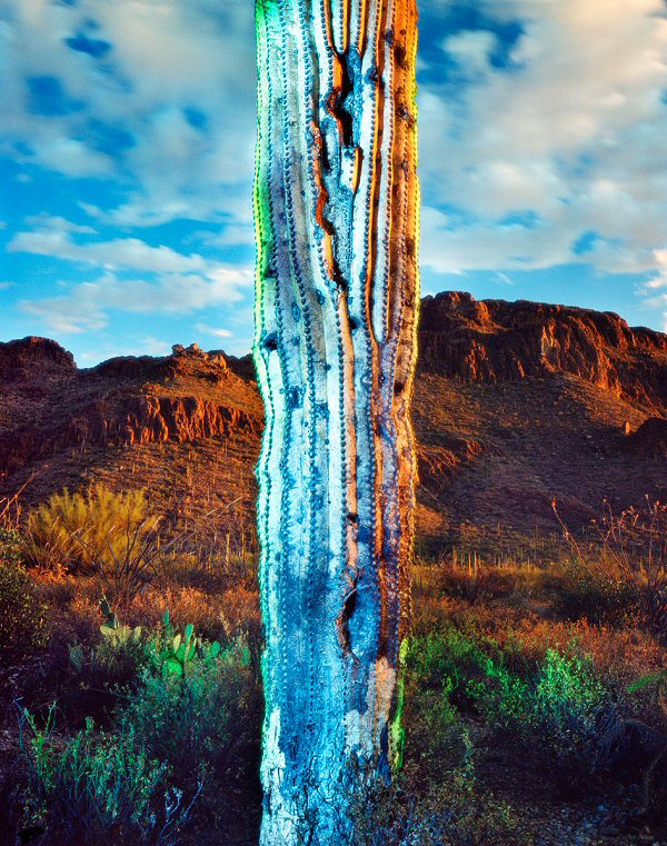 William Lesch, Old Saguaro and Gates Pass