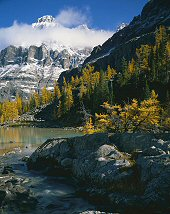 Keith Logan, Mount Huber and Larches