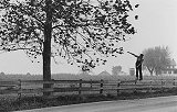 Amish Boy Walking Fence